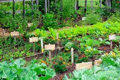 Secrets of a High Yield Gardening