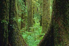 Google Image Result for http://cdn.lightgalleries.net/4bd5ec0174be3/images/web-temperate-rainforest-8-2.jpg
