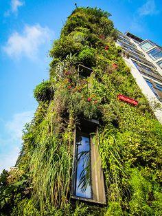 The living wall outside a Mayfair hotel, London, UK (2013)