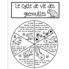 Roue du cycle de vie de la grenouille Grade 3 Science, Primary Science, Teaching Science, Science For Kids, Science Activities, Science And Technology, Teaching Resources, Sciences Cycle 3, Science Montessori