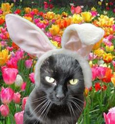 Easter Cat? Not a happy one! This looks like my cat Estein and she is NEVER happy... LOL!!!