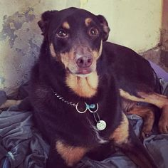Paciente do Dia: Tutty #holistic #veterinaria #veterinary #vet #holistico #acupet #pacientedodia