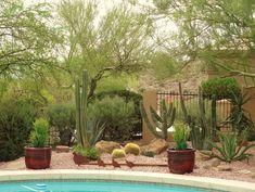 jardines de cactus