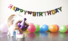 Happy National Dog Day!! enjoy the day with your pup and have a Dog birthday party!!!