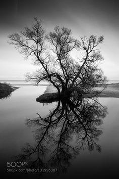Haväng tree by EvaBjursten