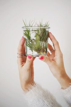 Air plants are popular in today's houseplant-rich world precisely because they are so low-maintenance. Since they get what they need from air, water and li