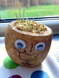 Potato grass head, potato cress head, cat grass potato head, potato head, cress head, grass head
