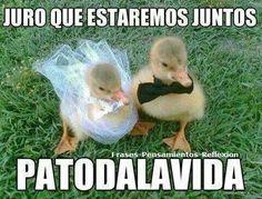 Para toda la vida... Pato...