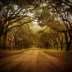 "when I was young we used to go for drives as a family and when we would drive down a road where the trees covered it my brother's and I would always yell out ""God's hugging us""!"