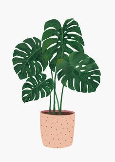 New Plants Painting Monstera 38 Ideas Plant Painting, Plant Drawing, Plant Art, Painting Art, Pattern Painting, Drawing Drawing, Art And Illustration, Botanical Illustration, Cat Illustrations