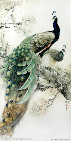 Male and female peacocks, probably watercolor and calligraphy ink - Chinese art. Love the detail and soft focus of the background flowers, too.