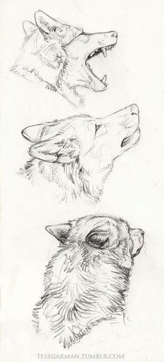 Need some drawing inspiration? Well you've come to the right place! Here's a list of 40 free and easy animal sketch drawing ideas and inspiration. Why not check out this Art Drawing Set Artist Sketch Kit, perfect for practising your art skills. Easy Pencil Drawings, Pencil Drawings Of Animals, Art Drawings Sketches, Cool Drawings, Sketch Drawing, Drawing Ideas, Drawing Animals, Sketches Of Animals, Anime Sketch