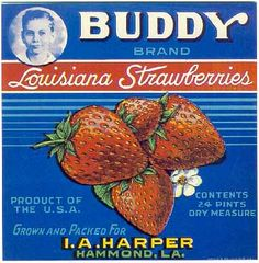 4 Old Buddy Strawberry Crate Labels - LA