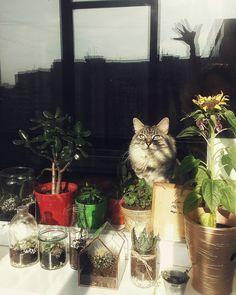 Муррнинг  #flowers #pots #cat #sunnymorning #sunnyday #cactus #succulents #shadow by vario_o