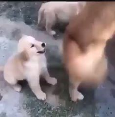 Okay, you can finish that now - Animales graciosos - Adorable Animals Funny Animal Videos, Funny Animal Pictures, Cute Funny Animals, Cute Baby Animals, Funny Dogs, Animals And Pets, Videos Funny, Cute Puppies, Cute Dogs