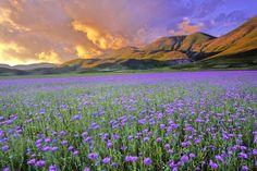 Pian Grande (plateau), Castelluccio di Norcia, Monti Sibillini Nationalpark, Umbrien, Italien