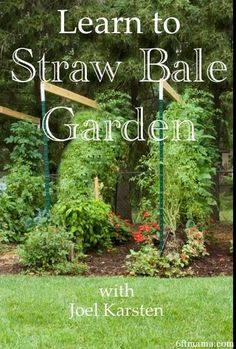 1000 Ideas About Straw Bale Gardening On Pinterest Gardening To Grow And How To Grow