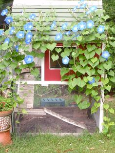 Morning Glories would be pretty on the run, but jasmine would grow so fast and provide wonderful shade. Not to mention, improve the smell a couple of months each summer!