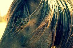 sunny chocolate horse photography