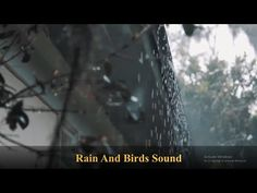 10 Minutes of gentle Rain fall And Birds relaxing Sounds relaxation concentration meditation video Gentle Rain Sounds, Relaxing Rain Sounds, Rain Sounds For Sleeping, Sound Of Rain, Rain Fall, Meditation Videos, Rain Storm, Nature Gif