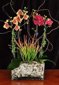 with Euphorbia tirucalli Firesticks