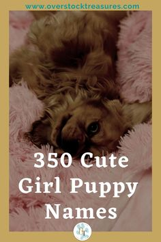 Hello pet lovers, dog lovers, dog owners and puppy owners. Are you a new pet owner? Did you just get a cute puppy or cute dog? Congrats! I created a list of unique dog names girl list. You are welcome to have my wonderful list of dog names girl unique list. This list is also for dog girl names for puppies. They are cut and unique puppy names female dogs.#puppy #puppynames #names #dognames #dog #doglove Puppies Names Female, Puppy Names, Pet Memorial Gifts, Cat Memorial, Cat Care Tips, Dog Care, Unique Cat Names, Pet Loss Grief, Famous Dogs