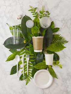 Vegware - Packaging made from plants, not plastic