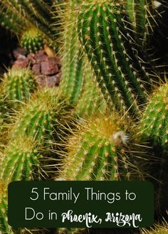 Five family things to do in Phoenix, Arizona, including the Phoenix Zoo and Baseball Spring Training.