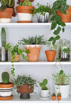 Terracotta pot inspiration: DIY PAINTED POTS!!