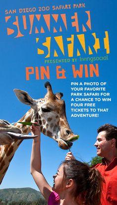 San Diego Zoo Safari Park Contest: Pin your favorite safari adventure for your chance to win!  #SummerSafari