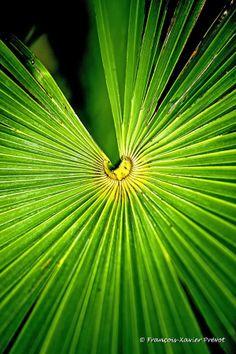 Repartir sur les Ailes de l'Automne - Photo: © François-Xavier PRÉVOT - http://www.photographe-marseille.eu/VENTE-DE-PHOTOS-D-ART-Repartir-sur-les-Ailes-de-l-Automne,143,7,fr,f1.html  #photo #photographe #Marseille #photographie #nature #jardinage #jardin #campagne #naturel #country #saison #season #ete #printemps #automne #hiver #palm #tree #palmier #feuille #vert #green