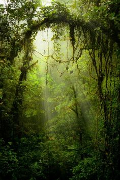 Earth is so beautiful, we should all do our best to preserve it. #gogreen #earth #beautiful: