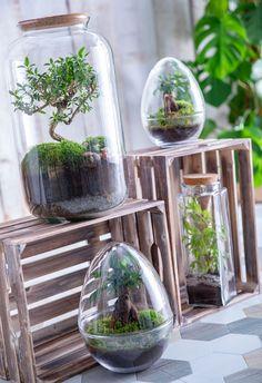 Créer facilement un terrarium Terrarium Diy, Terrarium Centerpiece, Hanging Terrarium, How To Make Terrariums, Air Plant Terrarium, Glass Terrarium, Hanging Plants, Room Deco, Jar Design