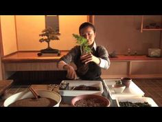 How to Make Your Own Bonsai #1 / 盆栽講座 山田香織 第1回 - YouTube