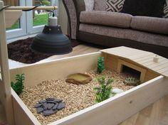Tortoise table hut