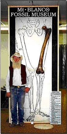 "In the late 1950s, during road construction in southeast Turkey in the Euphrates Valley, many tombs containing the remains of Giants were uncovered. At two sites the leg bones were measured to be about 47-1/4 inches long. Pictured is an anatomically correct, completely to scale, reproduction of the human femur. This ""Giant"" stood some 14-16 feet tall, and had 20-22 inch long feet. His or Her finger tips, with arms to their sides, would be about 6 feet above the ground."