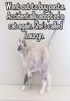 """""""Went out to buy pasta. Accidentally adopted a cat again. She's called Lauryn.       """""""