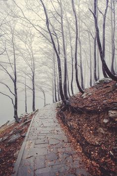 A great walk to discover the mists of intrigue...only in Autumn,everyone !!!!!