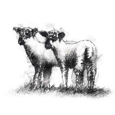 Fine Art Drawing, Art Drawings, Sketch A Day, Shop Art, Lambs, Surface Design, Uk Shop, Sheep, Giclee Print