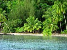 Praia com lindos coqueiros