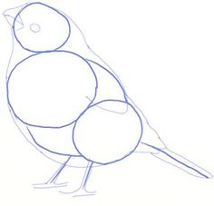 In this lesson you will learn easy steps of drawing a Bullfinch properly and learn the basic technique for drawing any birds. Pencil Drawings Of Flowers, Flower Tattoo Drawings, Bird Drawings, Pencil Art Drawings, Animal Drawings, Easy Drawings, Drawing Birds, Easy Portrait Drawing, Painting & Drawing