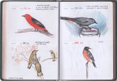 Bird  Drawings – Sketch a Day Book