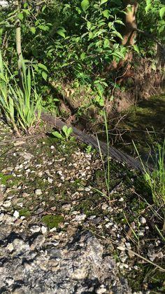 Moss on concrete bridge 5/18/16
