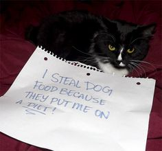 #catshaming I steal dog food because they put me on a diet!