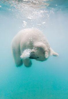 Polar Bear Water Ballet by Russian photographer, Olga Gladysheva Cute Baby Animals, Animals And Pets, Funny Animals, Wild Animals, Beautiful Creatures, Animals Beautiful, Majestic Animals, Animal Original, Baby Polar Bears