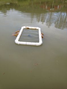 Turtle trap Live Animals, Animals And Pets, Turtle Traps, Snare Trap, Farm Pond, Emergency Binder, Turtle Pond, Fishing Tips, Survival Gear