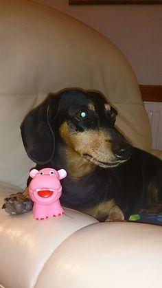 Leyla my wiener