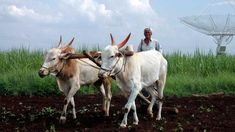 Bjp Terms Msp Hike As Historic But Is It Really So Farm Tour