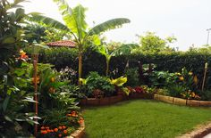 All what you need steamy & subtropical place and thriving garden web site when i. - All what you need steamy & subtropical place and thriving garden web site when it comes to the new -