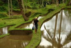 Walk through the old rice fields of Bali, just outside the ancient site of Gunung Kawi